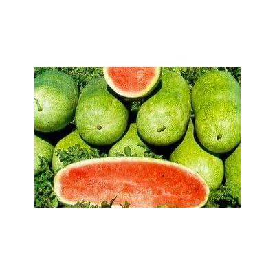 Watermelon Seeds Ukraine Heirloom Organic Berries Fruit Seeds Charlston Grey : Garden & Outdoor