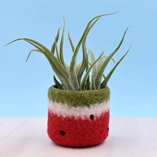 Felt vase/cactus vase/watermelon planter/Red watermelon/home decor