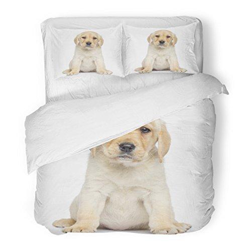 Set Beige Dog Labrador Puppy Sitting Facing White Alone Animal Canine Decorative Bedding Set Pillow Sham Twin Size ()