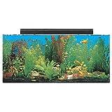 SeaClear System II Acrylic Aquarium