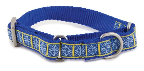 PetSafe Fido Finery Martingale-Style Dog Collar, 1-Inch, Medium, Morocco