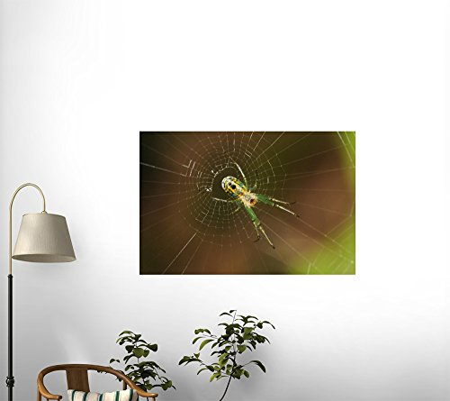 National Geographic - A Spider in Its Orb Web Peel and Stick Wall Decal by Wallmonkeys
