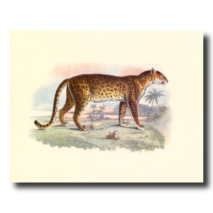 Leopard Photo - Tropical Leopard Cat Wildlife Wall Picture 16x20 Art Print