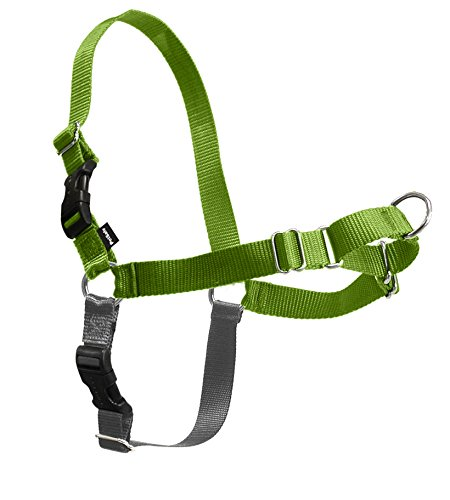 PetSafe Easy Walk Harness, Medium/Large, APPLE GREEN/GREY for Dogs - Green Dog Lead