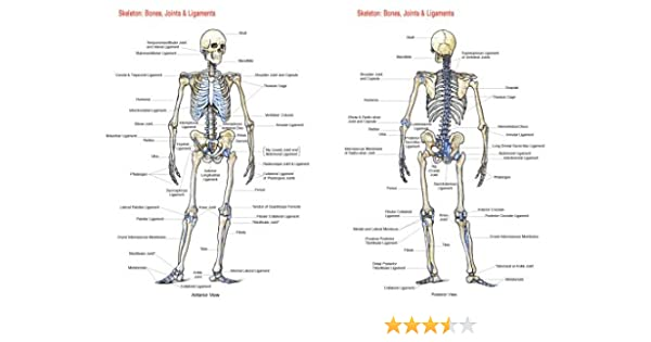 skeleton bones, joints and ligaments chart flash anatomy Knee Joint Bones Diagram