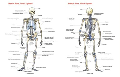 Skeleton: Bones, Joints And Ligaments Chart: Flash Anatomy ...