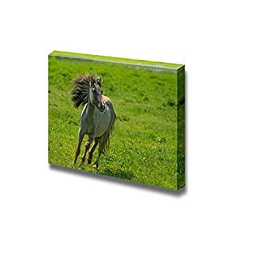 Canvas Prints Wall Art - Wild Horse Running in a Sunny Meadow/Grassland | Modern Wall Decor/Home Art Stretched Gallery Wraps Giclee Print & Wood Framed. Ready to Hang - 24