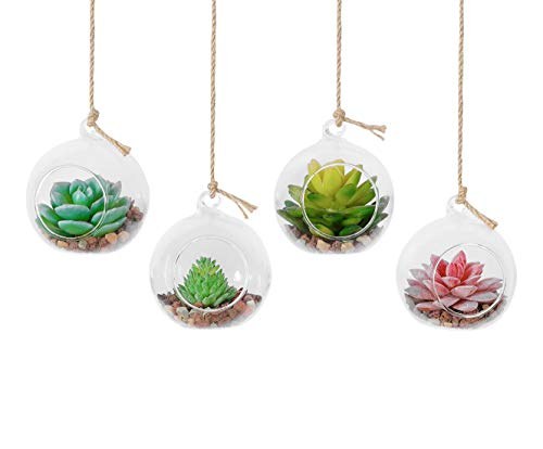 TQVAI 4 Pack Glass Hanging Air Plant Terrarium Vase with 39 inch Sling (Not Included The Plants)