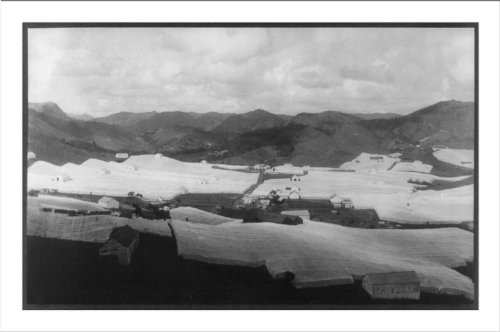 (Historic Print (L): [San Juan, Puerto Rico, 1920: broad panorama of tobacco f...)