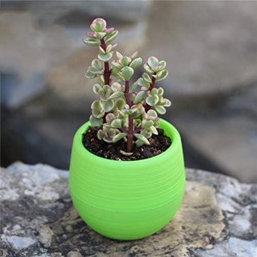 CFYRY 多肉植物インテリア植物デスクトップフラワーポットのためのドロップシップ1PCミニフラワーポットカラフルなラウンドプラスチック工場フラワーポットプランター (Color : White)