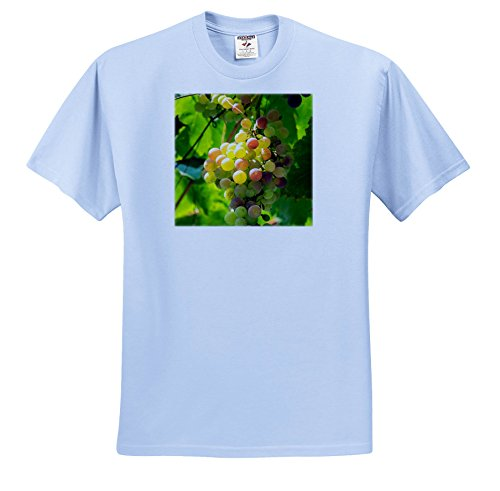 3dRose Danita Delimont - Vineyards - Grapevine, Corfu, Greece, Europe - T-Shirts - Adult Light-Blue-T-Shirt XL (Grapevine Three Light)