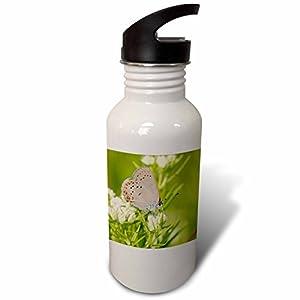 3dRose Danita Delimont - Butterflies - Coral Hairstreak on Slender Mountain Mint, Reynolds Co., Missouri - Flip Straw 21oz Water Bottle (wb_279154_2)