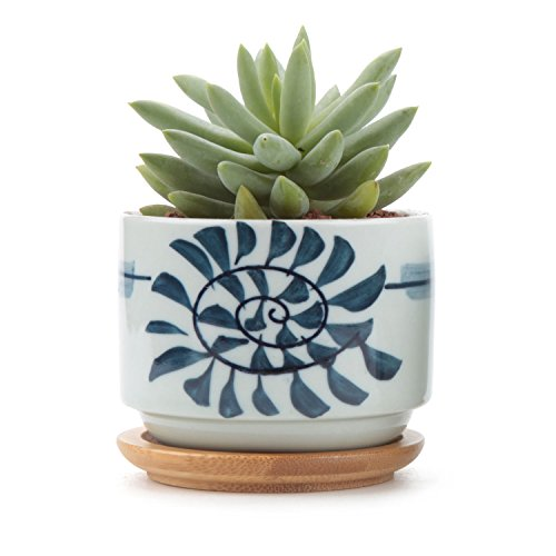T4u 3 Inch Ceramic Japanese Style Serial No 8 Succulent