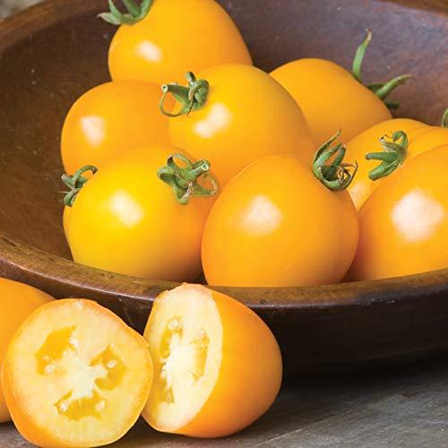 Burpee Golden Mama' Hybrid Paste Tomato, 3 Live Plants | 2 1/2