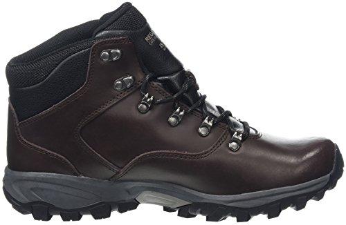 Marron de Randonnée Bainsford Homme Hautes Peat Chaussures Regatta Zxq1zYfw