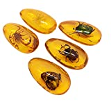 LIOOBO Amber Fossil with Insects Samples Stones Crystal Specimens Home Decorations Collection Oval Pendant for Kids (Random Pattern)
