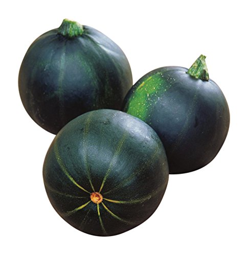 Burpee Eight Ball Zucchini Summer Squash Seeds 25 seeds