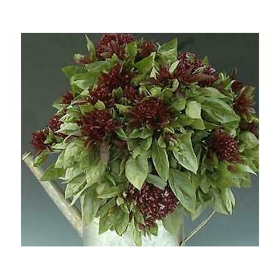 1, 000 Seeds Basil Cardinal : Garden & Outdoor