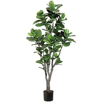 6 fiddle leaf fig tree wpu trunk in plastic pot green