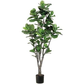 6u0027 Fiddle Leaf Fig Tree W/PU Trunk In Plastic Pot Green