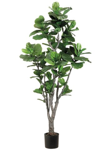 6' Fiddle Leaf Fig Tree w/PU Trunk in Plastic Pot Green (Pack of 2)