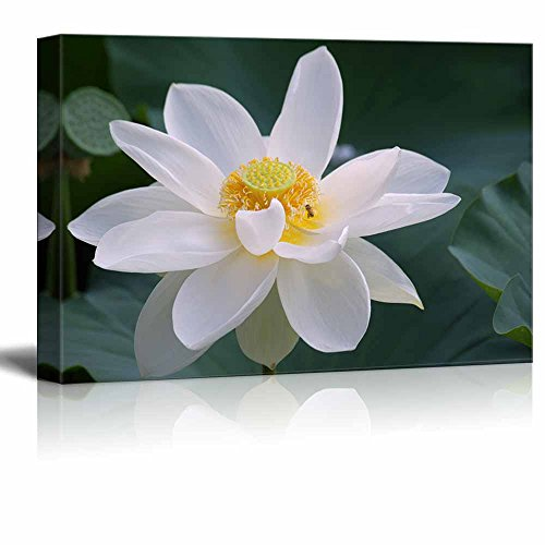 Lotus Flower with Bee Wall Decor ation