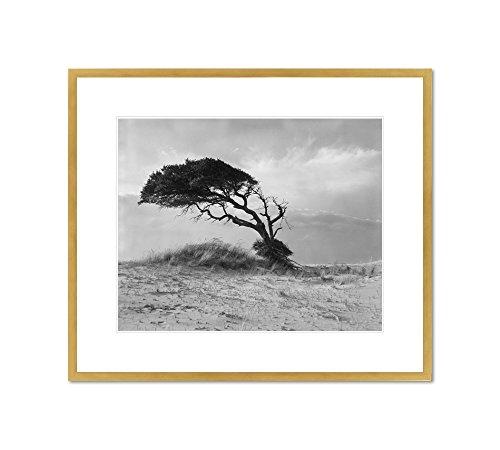 Live Oak  Outer Banks  North Carolina By Hugh Morton  Circa 1967  Framed Art Print