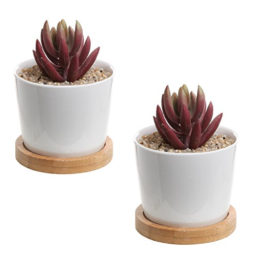 Ceramic Succulent Planter Containers Saucers