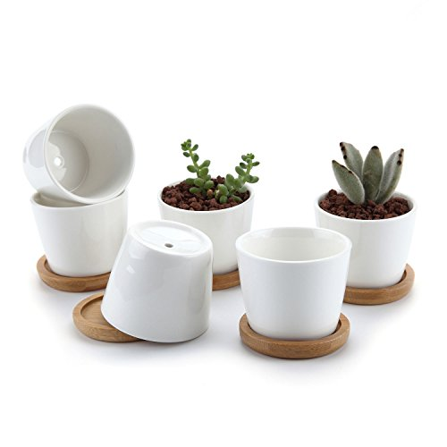 T4U 2.5 Inch Ceramic White Round Simple Design Succulent Plant Pot/Cactus Plant Pot Flower Pot with Free Bamboo Tray/Container/Planter White Package 1 Pack of 6