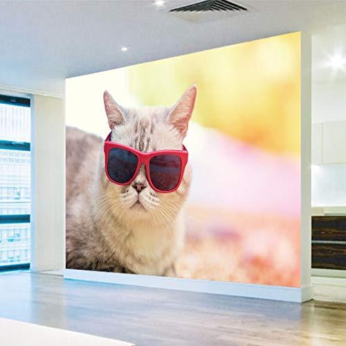 Amazon Com Wallpaper Effect Photo Wallpaper Hd Beautiful Cute Cat Photography Close Tv Background Wall Living Room Wallpaper Lobby Mural 350x250cm Baby