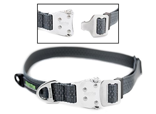 Mighty Paw Metal Buckle Dog Collar, All Metal Hardware, Lightweight Collar, Reflective Stitching, Strong, Durable (Medium, ()
