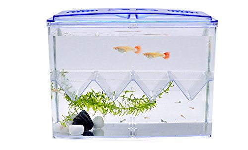 food baby fish - 8