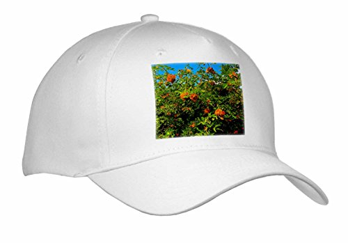 DYLAN SEIBOLD - PHOTOGRAPHY - ROBINS GALL IN ROSES - Caps - Adult Baseball Cap - Sun Galls