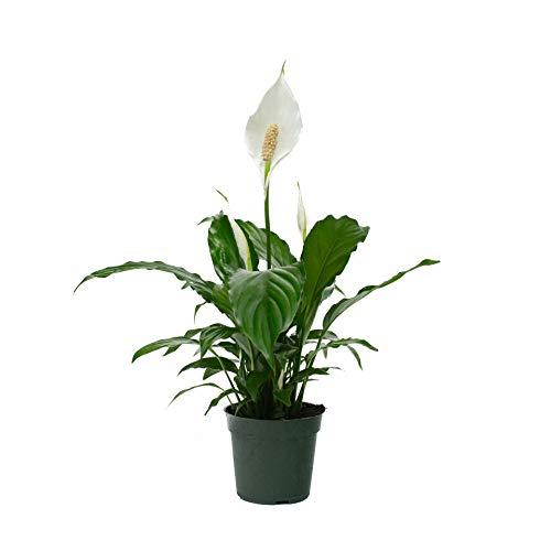 Fresh Flowers & Live Indoor Plants