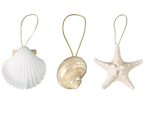 Tumbler Home Sea Life Ornament Trio – Iridescent Spiral Turbo, 3.5 in Knobby Starfish and Pure White Clam Shell -