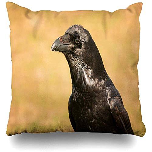 Throw Pillow Cover Square 18x18 Field Animalia Brigh Black Plumage Crow Nature Corvidae Parks Aves Avian Bad Beak Bird Design Corvid Zippered Cushion Case Home Decor -