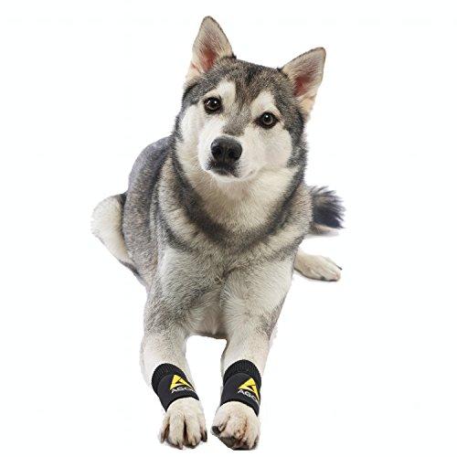 AGON Pair Dog Canine