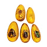 LIOOBO Amber Fossil with Insects Samples Stones