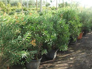 Mature bush hot