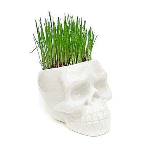 Creative Mini Ceramic White Skull Flower Pot Home Office Plant Decor Flowerpot 1 pcs.