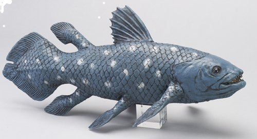 Aico Coelacanth Figure Ancient Fish (Japan Import)