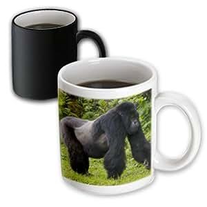 Amazon.com: 3dRose 132073_3 Rwanda, Mountain Gorilla, No 2 Silverback Mug 11 oz Black/White ...