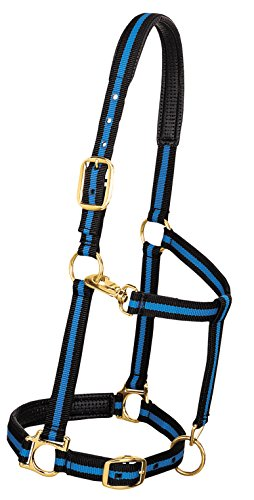 - Weaver Leather Padded Adjustable Nylon Horse Halter, Blue, 1