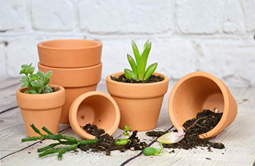 Garden clay pots big