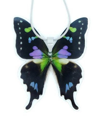 Real Butterfly Wing Necklace Graphium product image