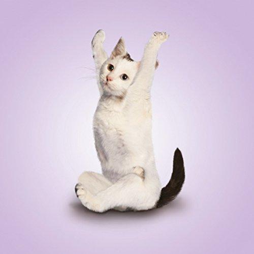 Yoga para gatos gracioso tarjeta en blanco, cumpleaños ...