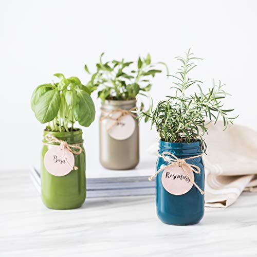 Thoughtfully Gifts, Mason Jar Garden, Grow Your Own Herbs Gift Set, Contains Rosemary, Basil and Sage Seeds with 6 Soil Pods by Thoughtfully (Image #4)