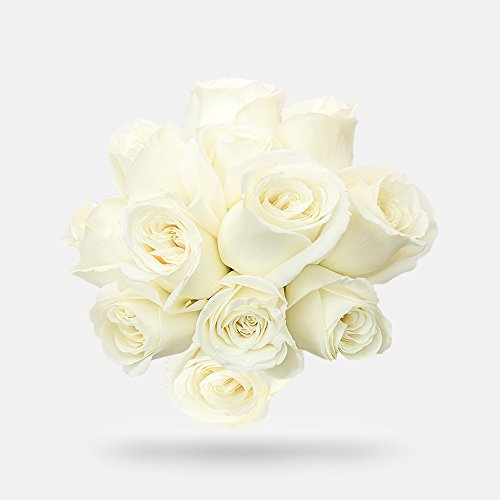 Dozen White Roses - 1 Dozen Red Rose Bouquet