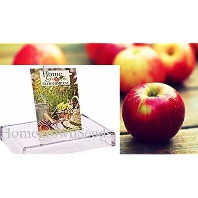 Homegrown Apple Seeds, 16, Jewel Apple Tree : Garden & Outdoor