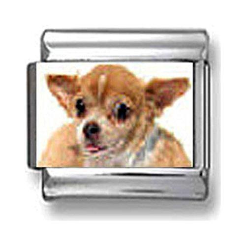 Chihuahua Italian charm